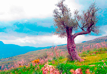 Hiking in Mohrein Reserve (See Zahle and Bekaa)