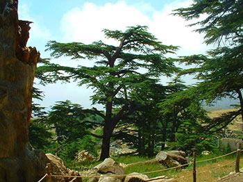 Hiking in the Cedars reserve